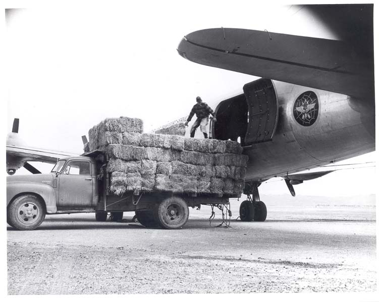 A silver airplane is loaded with bales of hay as part of Operation Haylift, which dropped hay to starving livestock near Ely when a massive snowstorm made roads impassable in 1949.